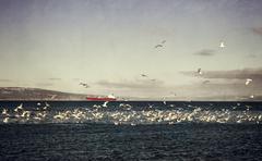 Tanker with shorebirds Stock Photos