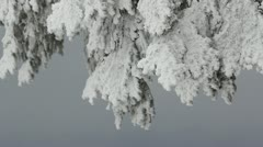 Fir tree branch covered with heavy white snow in the winter wind breeze - stock footage