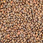 cedar nuts texture - stock photo