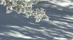 Superb white winter scenery with snowed fir tree branch and shadows Stock Footage