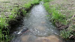 Stream in a park Stock Footage