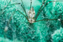 giant house spider - stock photo