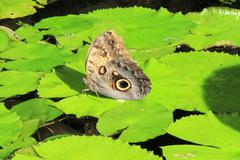 Butterfly on a leaf - stock photo