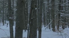 Cross-Country Ski through trees. Punch in from previous (Dolly Shot) Stock Footage