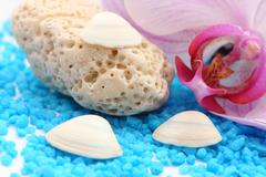 coral holey - stock photo