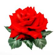 Hand Piirustus Punainen ruusu eristetty valkoisella taustalla Piirros
