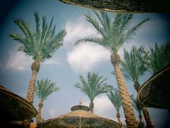 Palm trees and umbrellas with toy camera effect Stock Photos