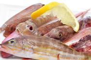 Stock Photo of raw fishes from the mediterranean sea