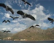Seagulls in flight. Stock Footage