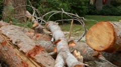Logs pile Stock Footage
