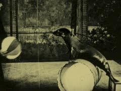 VAUDEVILLE SEAL ACT 3 - stock footage