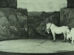 VAUDEVILLE HORSE ACT 2 - stock footage