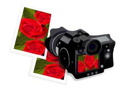 A Camera with Rose Image and Frame Stock Illustration