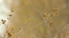 Burdock close-up on blurred background in winter Stock Footage