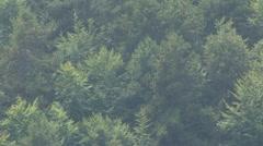Olymp Mountain Landscape in Greece Stock Footage