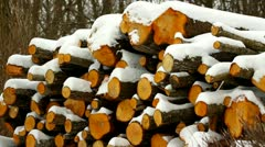 Pile of logs with snow in winter Stock Footage