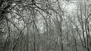 Stock Video Footage of Loop: Snow clumps falling from trees in oak forest