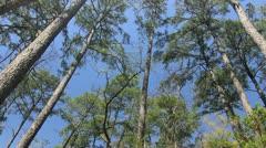 Hunstville trees 4 Stock Footage