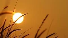 Sunrise Silhouette Stock Footage