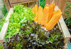 fresh corn and vegetables on the table in the garden - stock photo