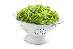 Arugula leaves in white colander Stock Photos