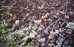 freezing flowers - stock photo