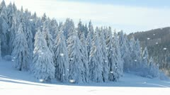 Beautiful winter landscape with falling snow - stock footage