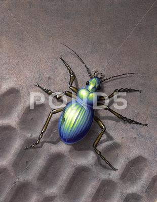 Stock Illustration of beetle running over skidmark