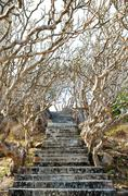 Stone stairs among crooked trees Stock Photos