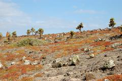 rocky terrain in the galapagos islands - stock photo