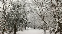 Snow covered forest Stock Footage