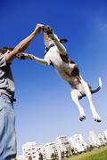 dog jumping for food - stock photo