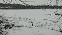 Sandhill Cranes in a snowy field Stock Footage