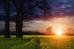 Rapeseed field contryside landscape at sunset with dramatic sky Stock Photos