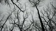 Winter treetops silhouetted, looking upward and twirling Stock Footage