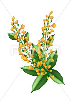 Stock Illustration of Beautiful Yellow Padauk Flower Isolated on White Background