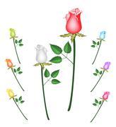 Kuvitus set Perfect Rose Kukkia Piirros