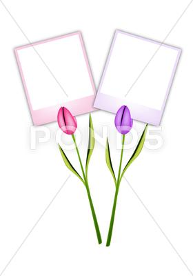 Stock Illustration of Two Beautiful Tulip Flowers with Blank Photos