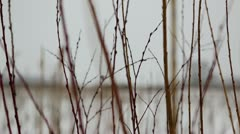 Prairie wetland grass in snowfall - closeup Stock Footage