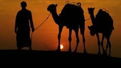 Camels Led Desert Sand Arab Male Sunset Stock Footage