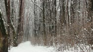 Stock Video Footage of Path in winter park. Snow is falling down from the forest trees.