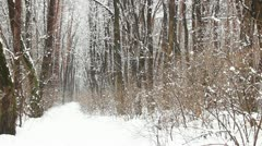 Snow falling on a path in winter park, slow motion Stock Footage