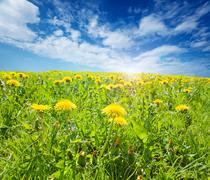 Sunsplashed meadow Stock Photos