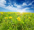 Stock Photo of sunsplashed meadow