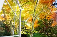 Stock Photo of window opens to fall garden
