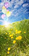 sunny field with balloons - stock photo