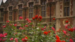 Flowers in Bloom Outside Cambridge HD Video Stock Footage