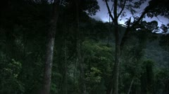 Cloudy Pan of Forest Valley, Tijuca Brazil HD Video Stock Footage