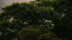 Close-Up of Tree Tops in Fog, Tijuca Brazil HD Video - stock footage