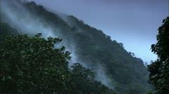 Stock Video Footage of Rolling Fog on Treetops, Tijuca Brazil HD Video